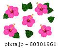 ハイビスカス 濃いピンク ベクター 南国 セット 60301961