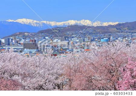 【長野県】弘法山古墳の満開桜と北アルプス 60303433