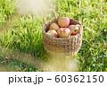 収穫 りんご 芝生 60362150