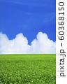 草原と青空 60368150