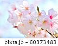 春の花 桜 60373483