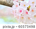 春の花 桜 60373498