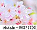 春の花 桜 60373503