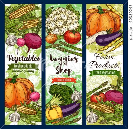 Veggies shop, farm products sketches, vegetables 60380243