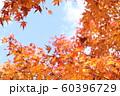 紅葉 もみじと空 60396729
