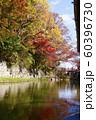 滋賀県 八幡堀の紅葉 60396730