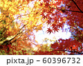 紅葉 もみじと空 60396732