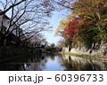 滋賀県 八幡堀の紅葉 60396733