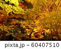 栗林公園の紅葉ライトアップ 60407510