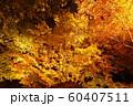 栗林公園の紅葉ライトアップ 60407511