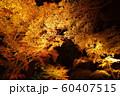 栗林公園の紅葉ライトアップ 60407515