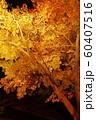 栗林公園の紅葉ライトアップ 60407516
