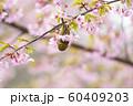 桜とメジロ 60409203