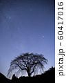 天の川と桜の木のシルエット 60417016