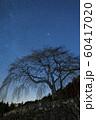 天の川と桜の木のシルエット 60417020