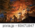 栃木・唐沢山神社の紅葉ライトアップ 60471847