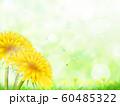 たんぽぽ 60485322