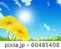 たんぽぽ 60485408