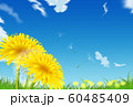 たんぽぽ 60485409