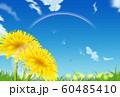 たんぽぽ 60485410