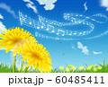 たんぽぽ 60485411