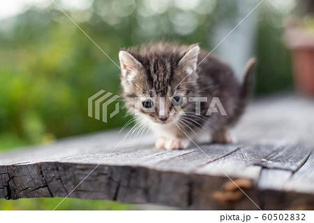 生後3ヶ月の子猫 60502832