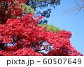 千秋公園の紅葉 60507649