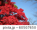 千秋公園の紅葉 60507650