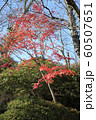 千秋公園の紅葉 60507651