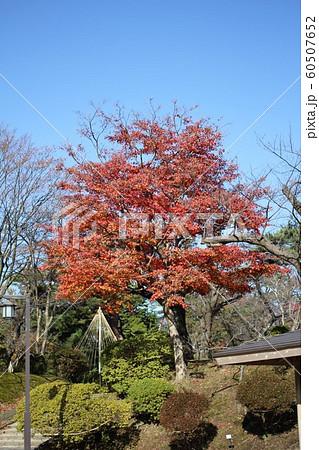 千秋公園の紅葉 60507652