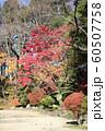 千秋公園の紅葉 60507758