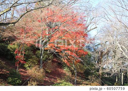 千秋公園の紅葉 60507759