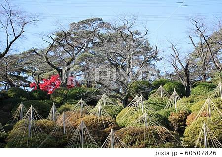 初冬の千秋公園 60507826