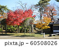 千秋公園の紅葉 60508026
