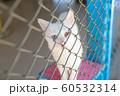 ヴァン猫 60532314