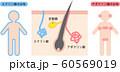 アポクリン汗腺とエクリン汗腺の分布 60569019