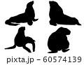動物シルエット海・川トド 60574139