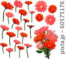 水彩風ベクター 赤&ピンク色のガーベラ 花束セット 60575176