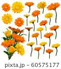水彩風ベクター 黄色&オレンジ色のガーベラ 花束セット 60575177