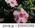 南国風の花 60605398
