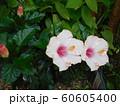 南国風の花 60605400