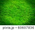 緑の芝生の空白のクローズアップ背景 60607836