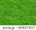 緑の芝生の空白のクローズアップ背景 60607837