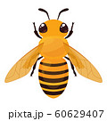ミツバチのイラスト_上 60629407