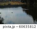 鴨の居る池 60635812