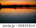 朝焼けの川と水鳥1 60635814