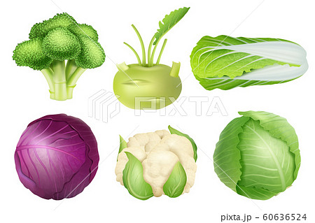 Cabbage set. Green nutrition agricultural objects vegetarian food natural healthy fresh products vector realistic collection pictures 60636524