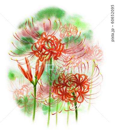 水彩で描いた彼岸花 60652095