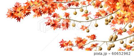 ブログ用ヘッダ画像モミジバフウ 60652962