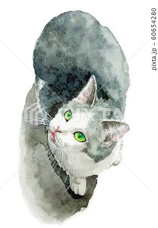 水彩で描いた白とグレーの猫 60654280